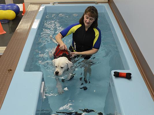 Custom Fiberglass Canine Therapy Pools Hudson Aquatic