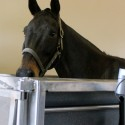 Underwater Treadmill Exercise for Horses