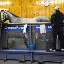 Benefits of AquaPacer Underwater Treadmill in Conditioning for the Dressage Equine