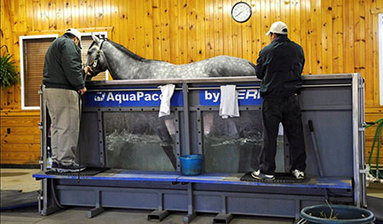 Benefits Of Aquapacer Underwater Treadmill In Conditioning
