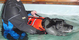 why-hydrotherapy-dog