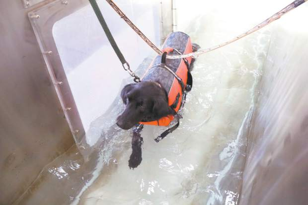 Hudson's Underwater Treadmill Helps Paralyzed Dog Walk Again