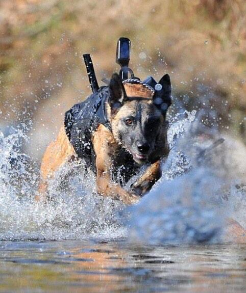 New Installs At The Military Working Dog Veterinary