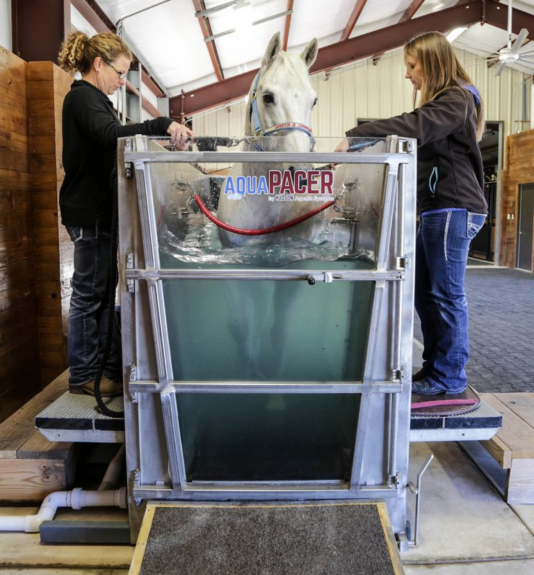 Horses Benefit from AquaPacer at Fossil Creek Equine Center