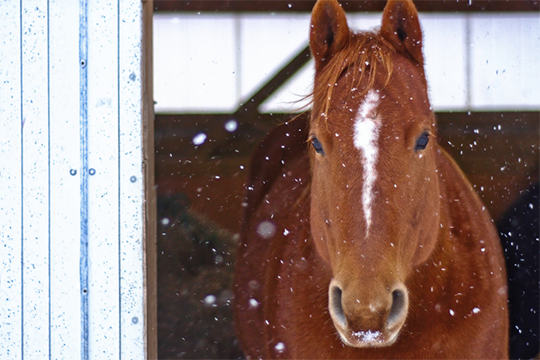 Equine Aquatic Therapy for Winter Conditioning and Rehab
